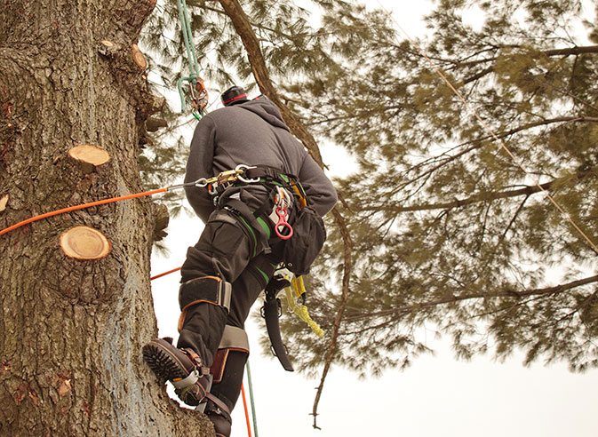 God And Country Tree Service, LLC. employee trimming a tree