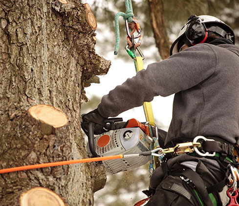 God And Country Tree Service, LLC. employee cutting a tree down