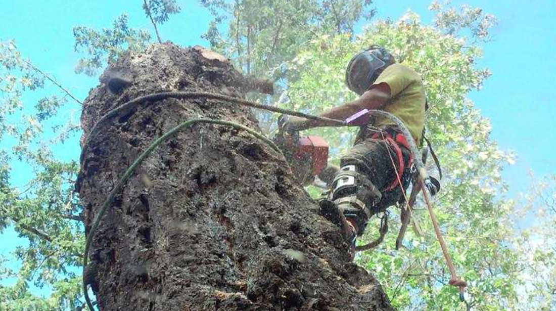 God And Country Tree Service, LLC.: Emergency tree removal in Grants Pass, Roseburg and Medford