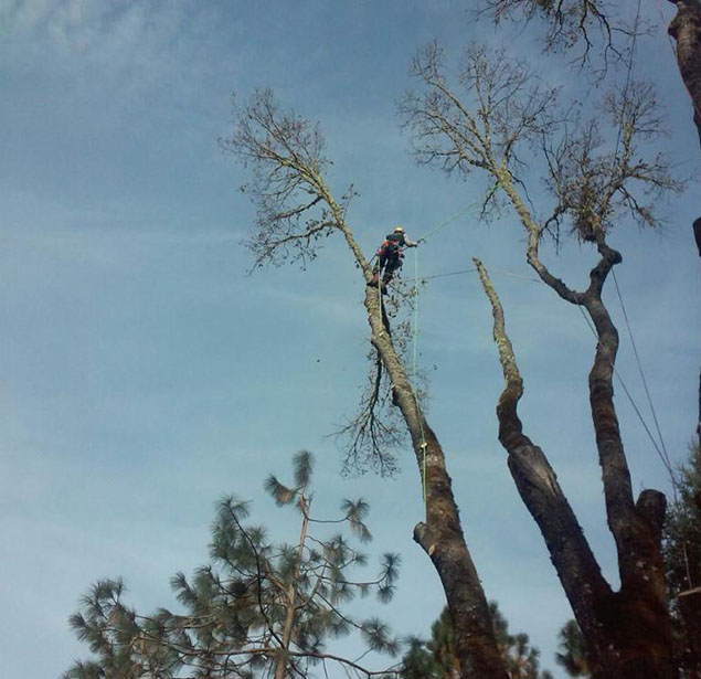 God And Country Tree Service, LLC.: Tree health in Grants Pass, Roseburg and Medford