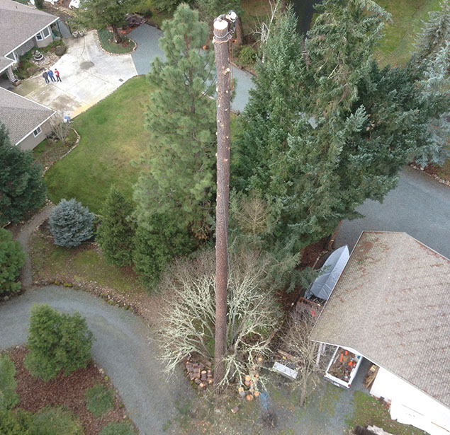 God And Country Tree Service, LLC.: Tree planning in Grants Pass, Roseburg and Medford