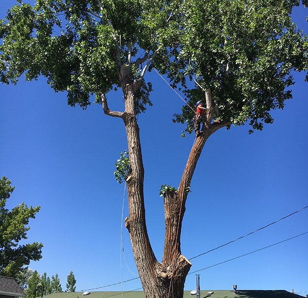 God And Country Tree Service, LLC.: Tree pruning in Grants Pass, Roseburg and Medford